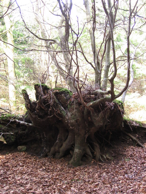 Roots or branches