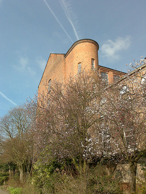 Harrington Mill and Cherry Blossom