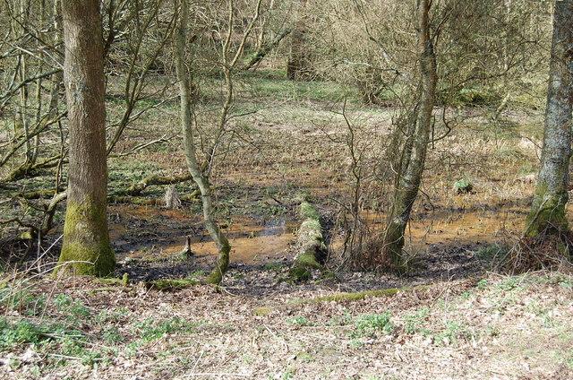 Marshy Ground in Darwell Wood