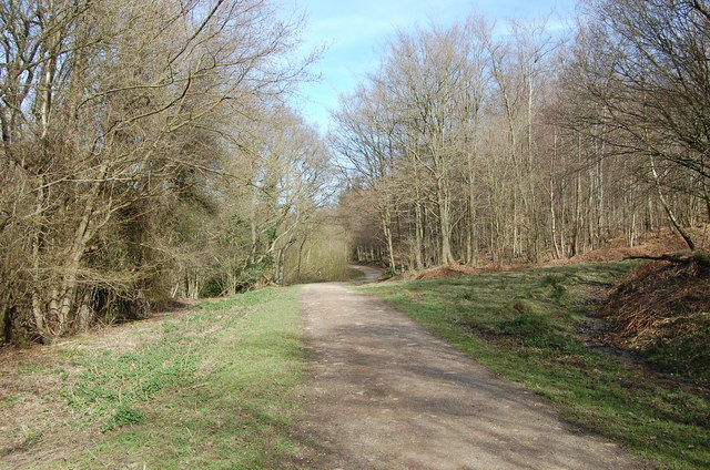 Entrance to Darwell Wood from Cackle street