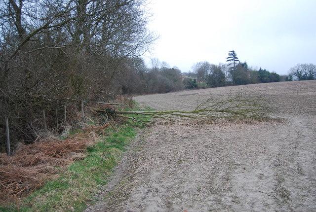 Fallen tree across the path