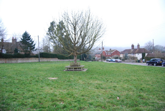 Tree in the middle of the village green, Hawkley