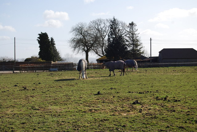 Horses, Manor Farm, East Worldham