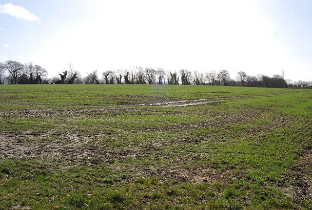 A muddy field of winter wheat, East Worldham (2)