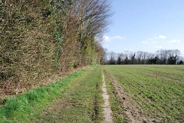 Footpath running along the hedge