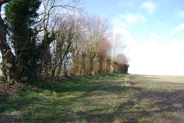 Hedgerow along the edge of the field