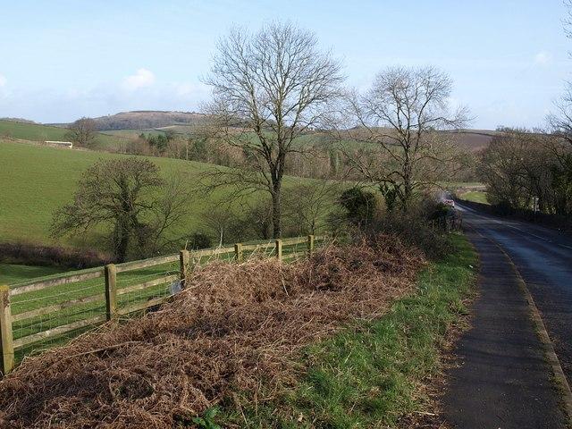 Trees by the road near Bickington