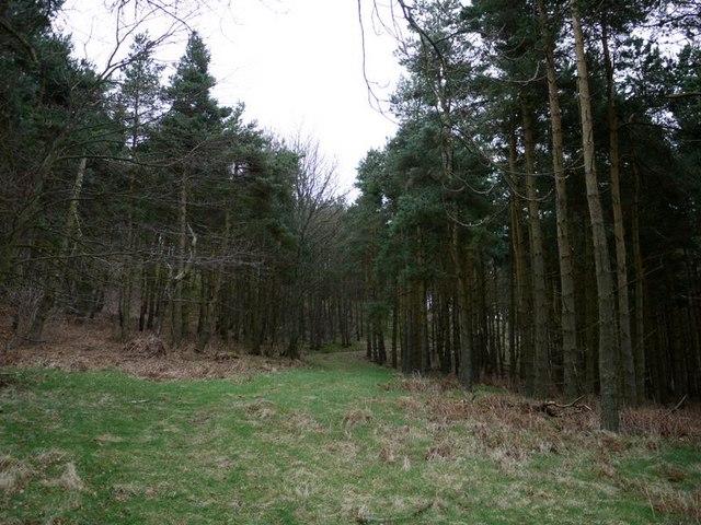 Hazeltonrig Plantation