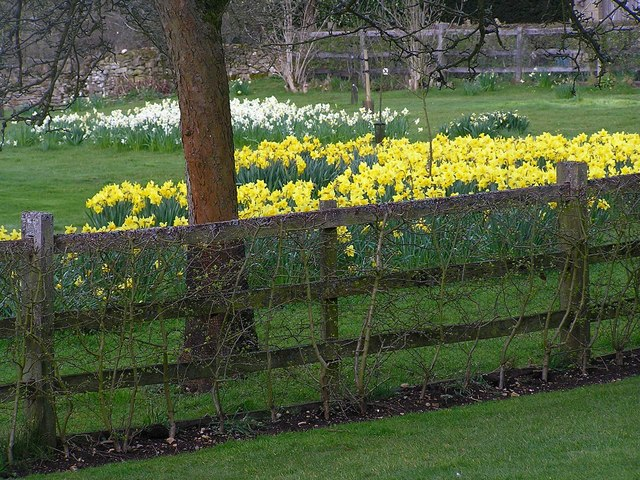 The glories of Spring at Snowshill Manor