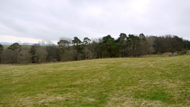 Hazeltonrig Plantation from the north