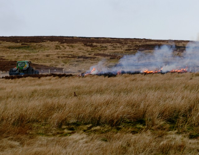 Heather burning on Cocklake Side