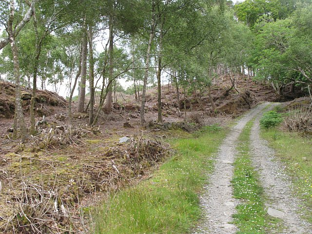 Rhododendron clearing, Eilean Shona