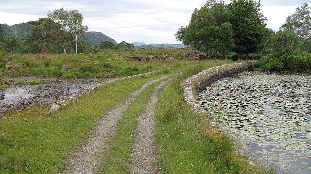 Dam, Lily Pond