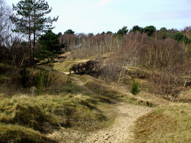 Pinewoods in Formby.