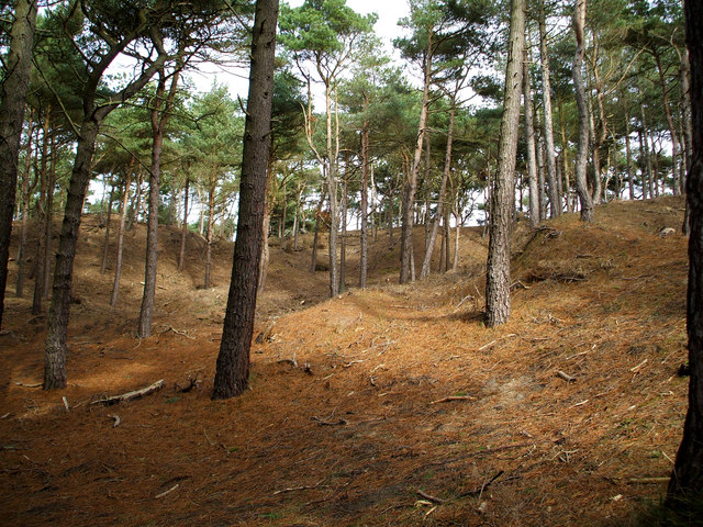 Formby woods.