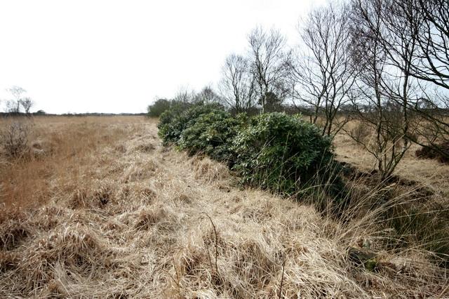 Crawley's Dyke on Winmarleigh Moss