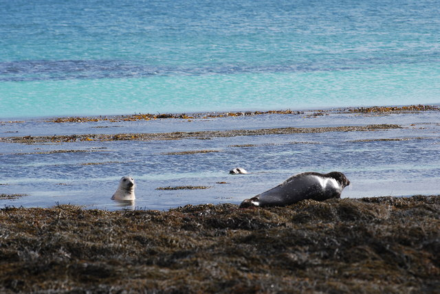 Seals at South Wick