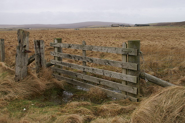 Fence at Tupton, Haroldswick