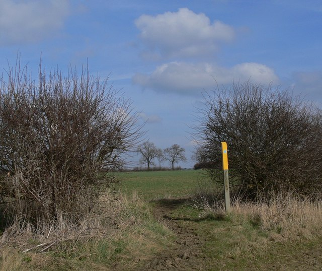 Bridleway through the hedge