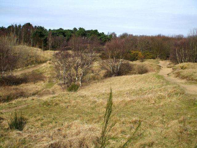 Formby woodland walk.