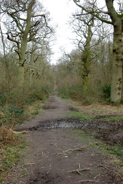 Pathway in Ryton Wood