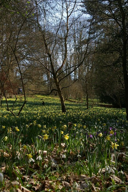 Warley Place Glade