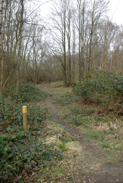 Bridleway in Ryton Wood