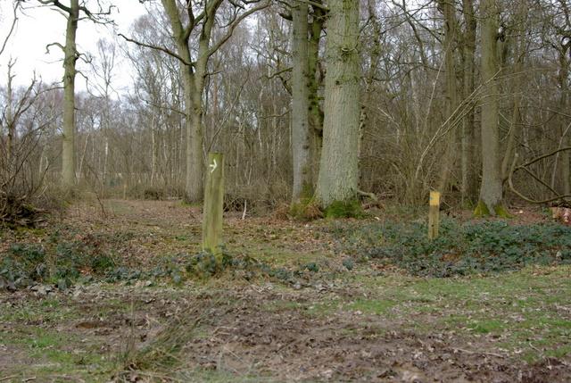 Bridleway in Ryton Wood