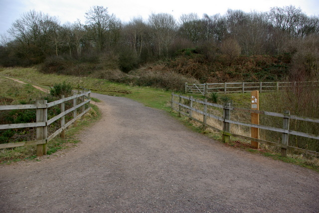 The path to Ryton Wood