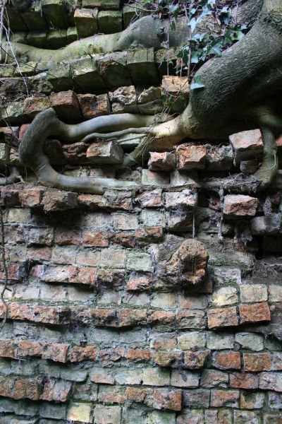 Root in the wall