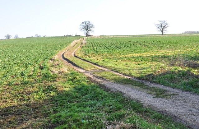 Footpath heading North, Bradwell
