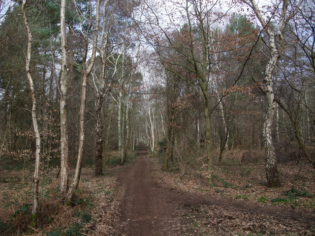 Robin Hood Way through Clumber Park