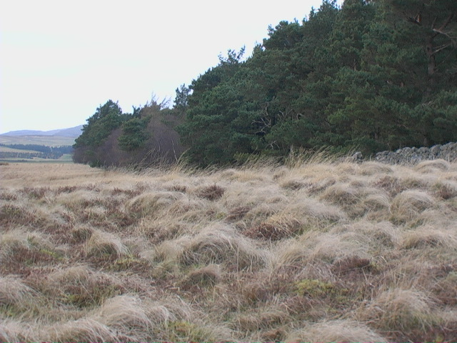West edge of Heddon Wood