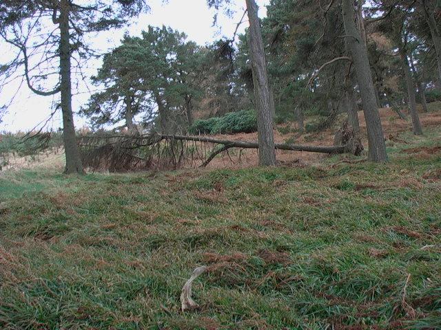 Inside the northern end of Heddon Wood near Lilburn Burn
