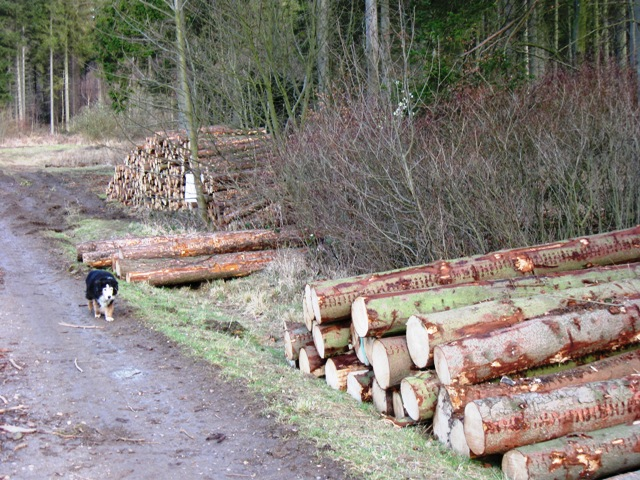 Cut Logs sorted by size