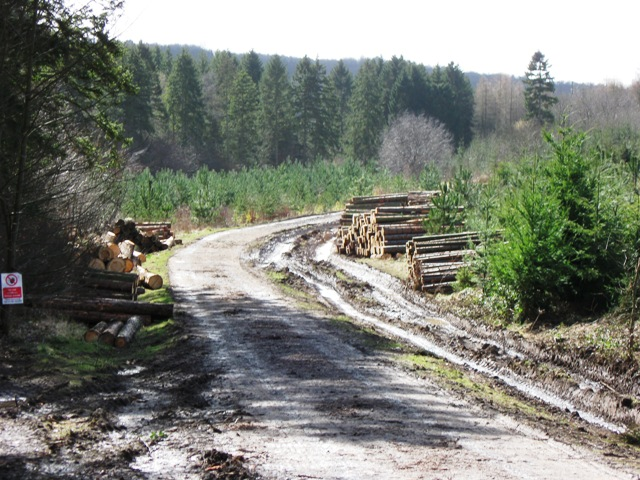 After the Timber Harvest - Ready for Collection