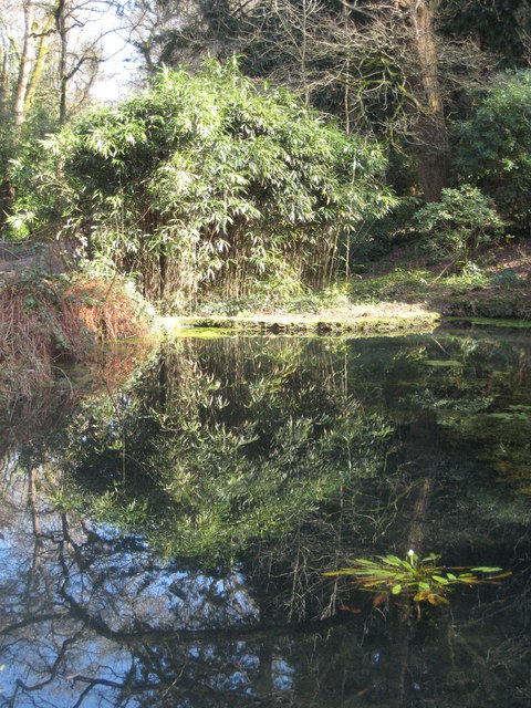 Pond on Pentillie Castle estate