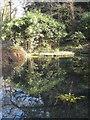 SX4064 : Pond on Pentillie Castle estate by Rod Allday