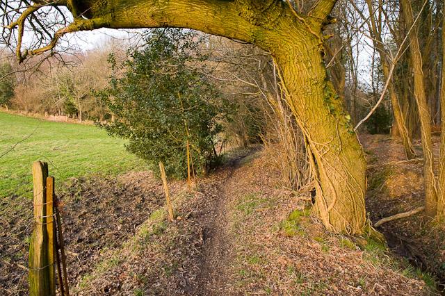 Footpath enters Dymer's Wood