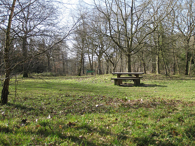 Picnic area, Haugh Wood