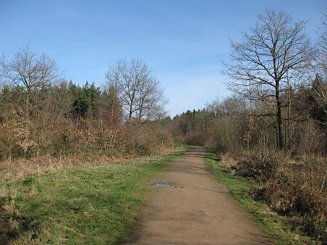 Heading North through Haugh Wood