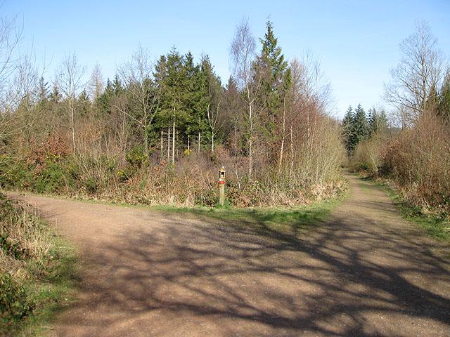 Track junction, Haugh Wood