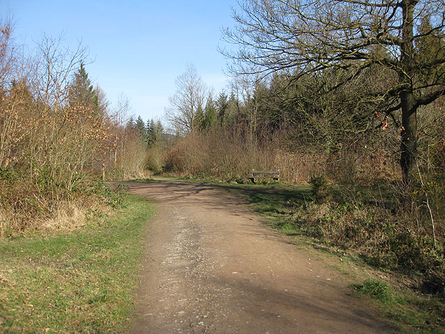 Seat by a junction on a woodland track