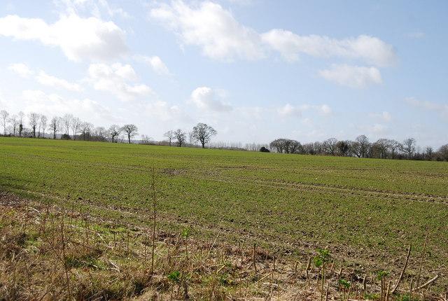 A field of Winter Wheat