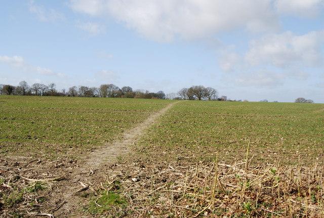 Footpath crossing a field of Winter Wheat