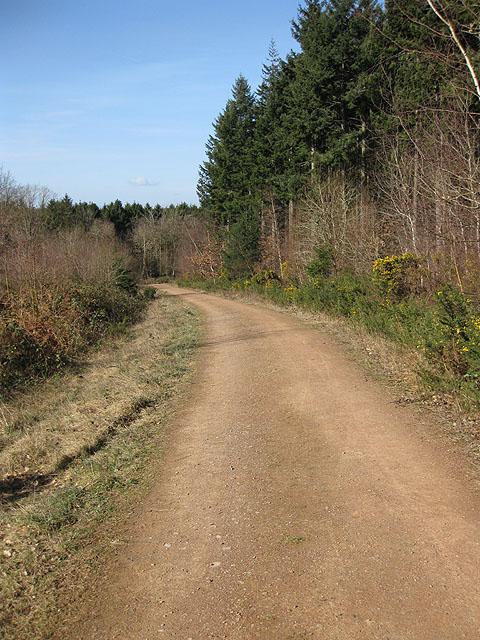 Track heading West through Haugh Wood