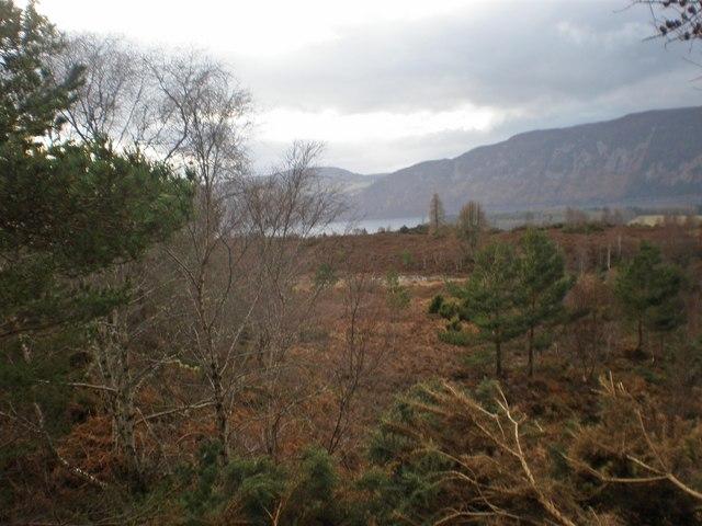 Deer Moorland near Dirr Wood