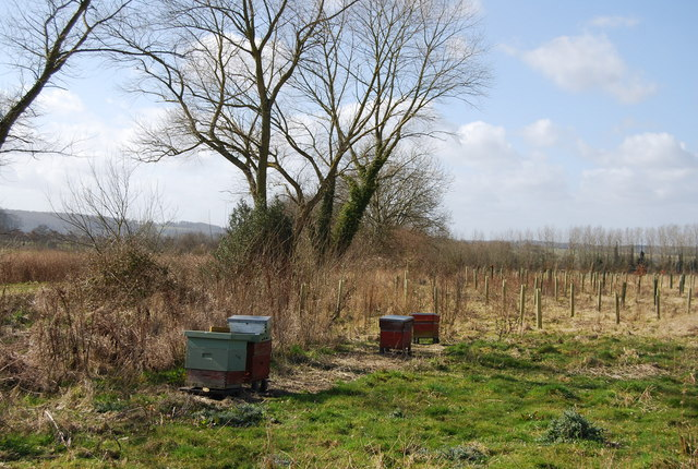 Beehives on the edge of Hartley Park