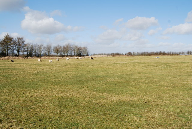 Sheep grazing on the site of Hartley Mauditt