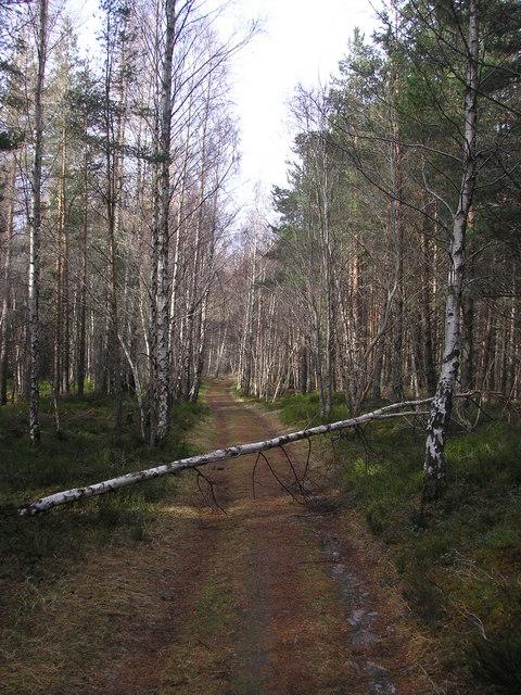 On the Allt Ruadh track, Inshriach Forest